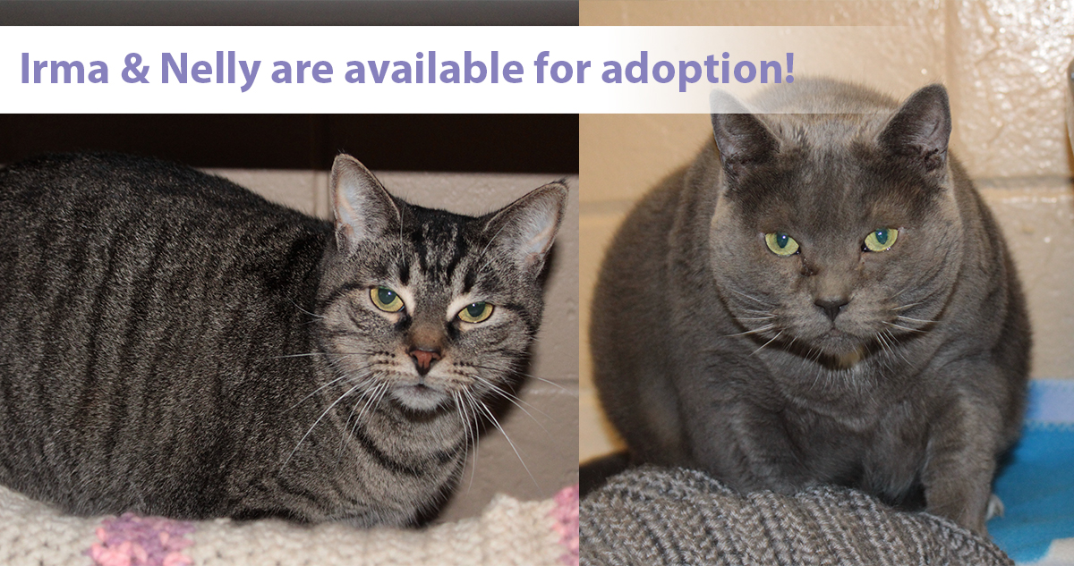 Irma (left) and Nelly (right) are available for adoption.